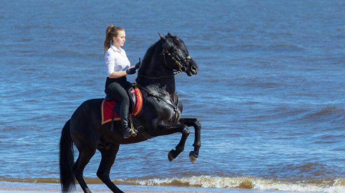 Andalusier und Reiterin am Strand