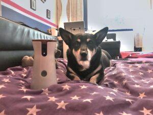 Testhündin Milla mit der Hundekamera Furbo