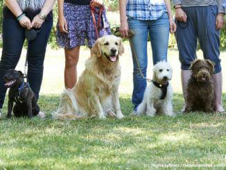 Grupe von Hunden mit ihren Besitzern beim Hundetraining