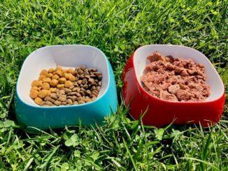 Zwei Hundenäpfe stehen auf einer Wiese, ein blauer mit verschiedenem Trockenfutter unterschiedlicher Farbe und Größe gefüllt, rechts daneben ein roter mit Nassfutter gefüllt.