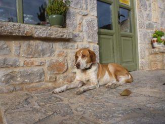 Braun-weißer Mischlingshund liegt vor einem Haus