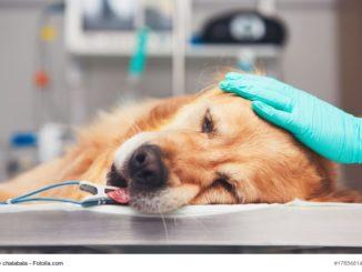 Intubierter Hund auf einem OP-Tisch mit behandschuhter Hand auf dem Kopf