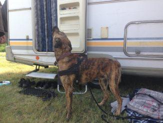 Hund steht vor Wohnmobiltür und heult