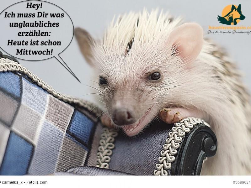 sweet fun cute hedgehog baby