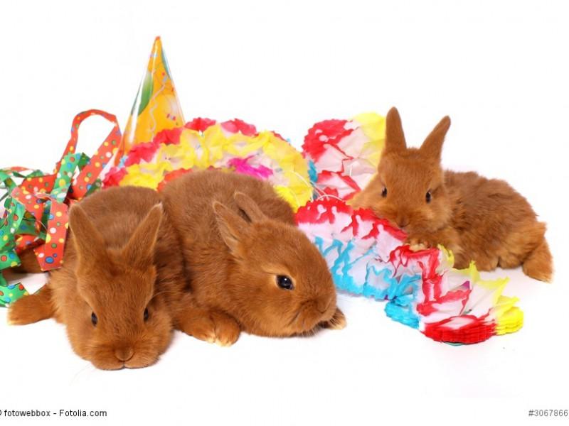 Drei kleine Kaninchen mit Partyschmuck