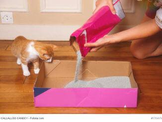 Eine Frau schüttet in einer Wohnung Katzenstreu in eine Pappkiste, ein rot-weißes Kätzchen schaut interessiert zu
