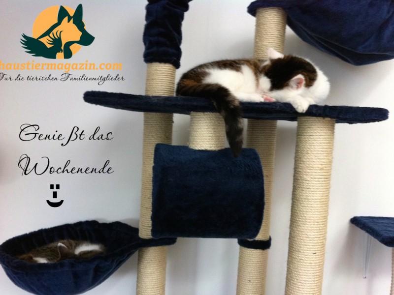 zwei-katzen-schlafen-kratzbaum