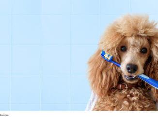 Zahnpflege für Hunde